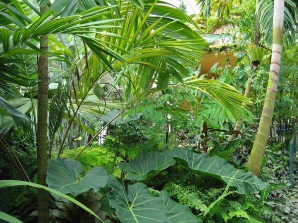 Τα τροπικά φυτά της Ρόδου