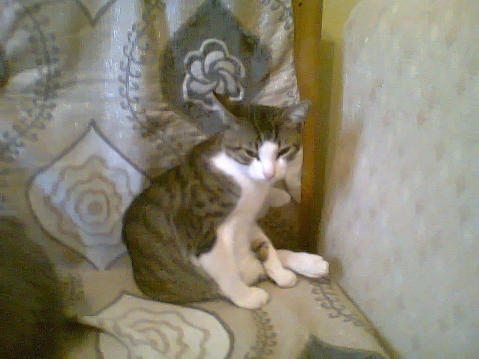 Χάθηκε γατάκι στην περιοχή Άι Γιάννης της Ρόδου