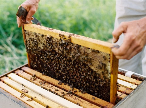 Δωρεάν σεμινάρια μελισσοκομίας απο τον Μελισσοκομικό Σύλλογο Ρόδου