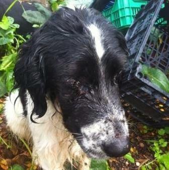 Πυροβόλησαν σκυλάκι στη Νίσυρο μέσα σε χωράφι …