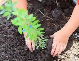 Διάθεση δενδρυλλίων και  φυτών από το Περιφερειακό Φυτώριο στην Κάσο