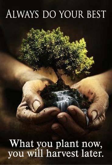 """""""Υιοθέτησε το δικό σου δέντρο! """" – Αναδάσωση από το Ροδιακό Δάσος στο φράμα του Γαδουρά"""