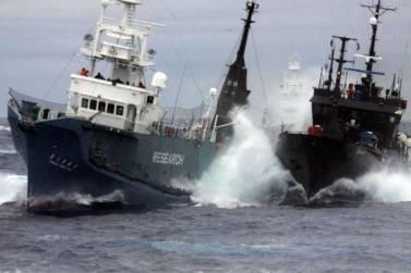 Νέα Ζηλανδία: Φαλαινοθηρικό εμβολίζει πλοίο ακτιβιστών (vid)