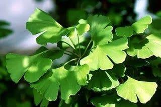 Το βότανο που ενεργοποιεί το μυαλό μας