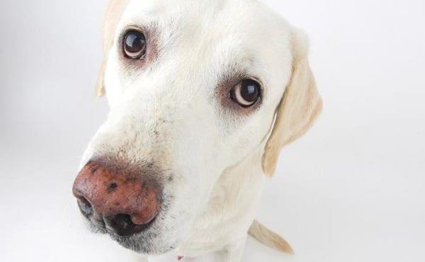Οι 10 τροφές που μπορεί να σκοτώσουν το σκύλο σας