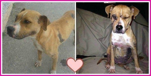 Ρόδος : Παρατημένη και πληγωμένη σκυλίτσα ψάχνει σπίτι