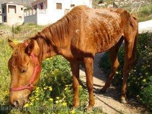 Αποτέλεσμα εικόνας για άλογα ιπποδρόμου