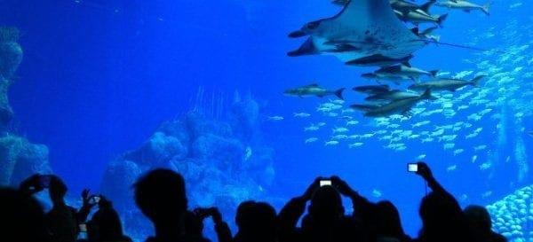 Μαγευτικές εικόνες από έναν υδάτινο παράδεισο -Το μεγαλύτερο ενυδρείο του κόσμου έχει ήδη σπάσει 5 ρεκόρ Γκίνες