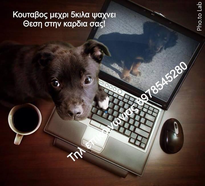 10329234_10152487493423324_7871672209989610588_n