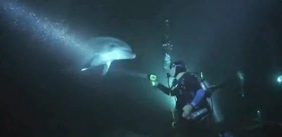 pligomeno-delfini-zita-ti-voithia-anthropou-video