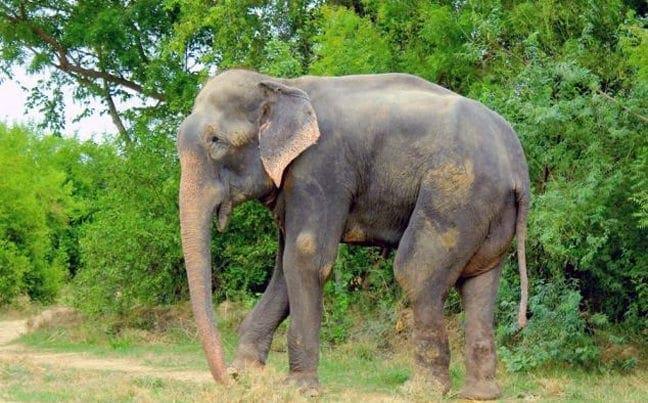 elefantas2