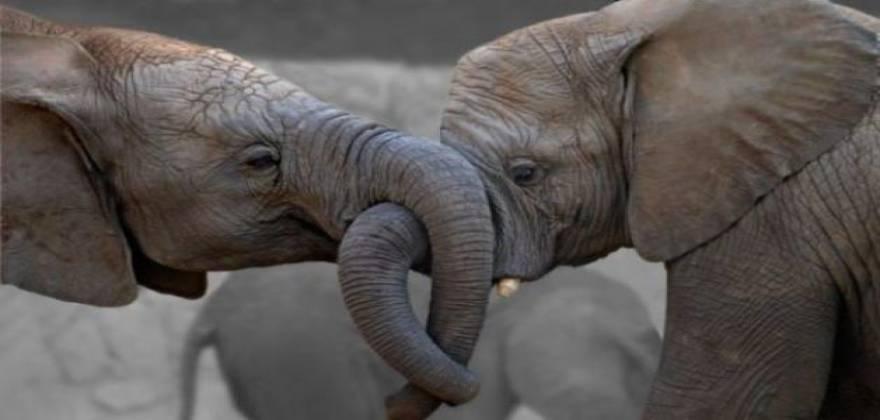 elefantes_0