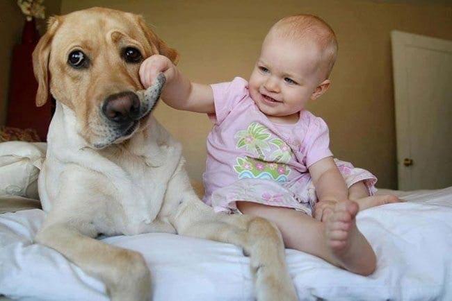 σκύλος-και-άνθρωπος4