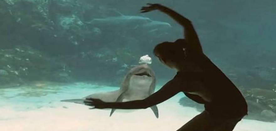 delfini_6