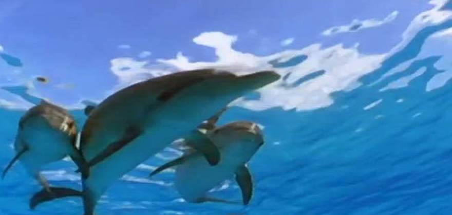 ekpliktika-plasmata-delfinia-prostatevoun-diti-apo-karcharia