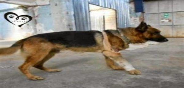 Πέντε αδέσποτοι σκύλοι έσωσαν 12χρονη από βιασμό!