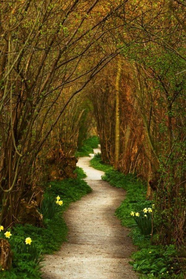 pathway8