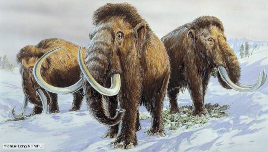 woolly_mammoth_1