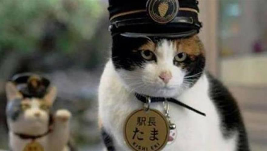 Ιαπωνία: «Έφυγε» από την ζωή η γάτα-σταθμάρχης