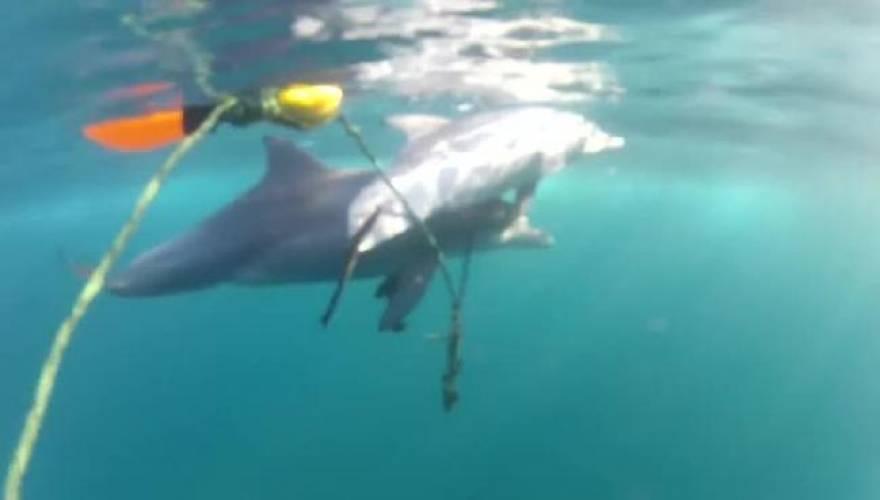 delfini_10