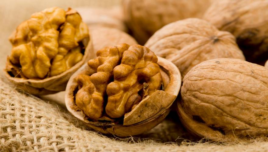 walnut-karydia
