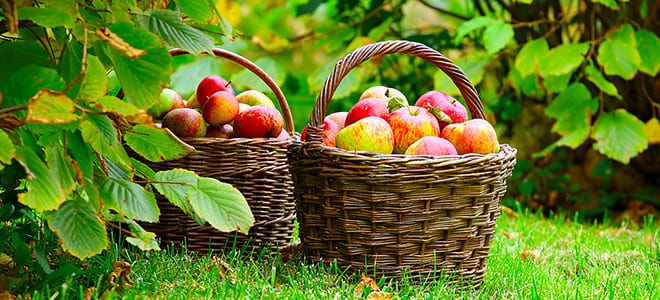 autumn-fruits-660