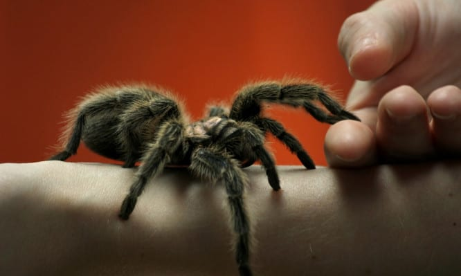 arachnophobia-666x399