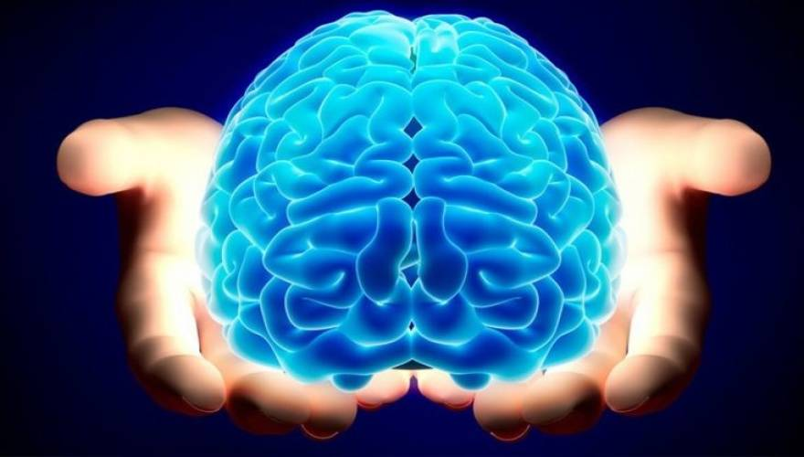 brain-735x440_0