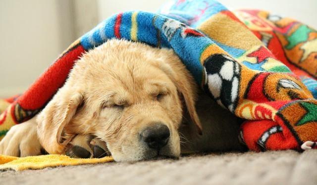 dog_cold_blanket