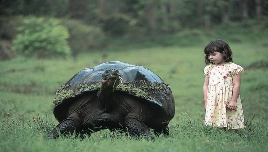 galapagos-gaint-tortoise-1