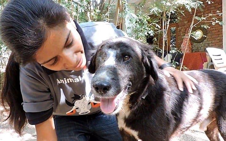 Το σκυλί που απέκτησε καινούριο πρόσωπο