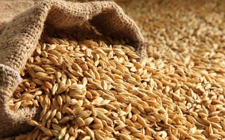 Barley-735x459