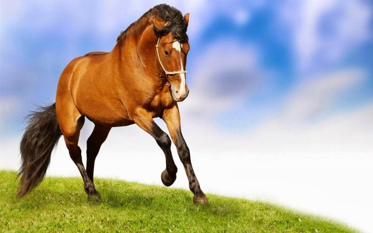 Running-Horse-Wallpaper-Hd
