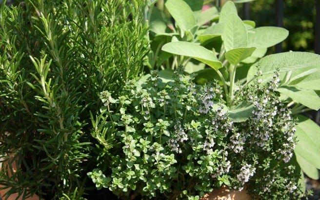 herb-garden.medium