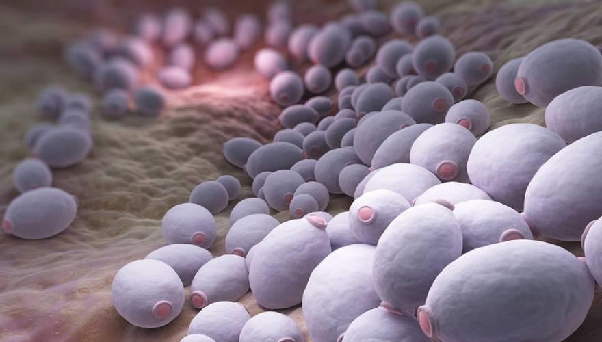 Candida-Albicans-Bacteria-98096267