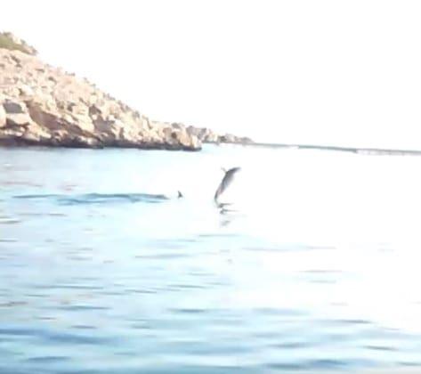 delfinaki