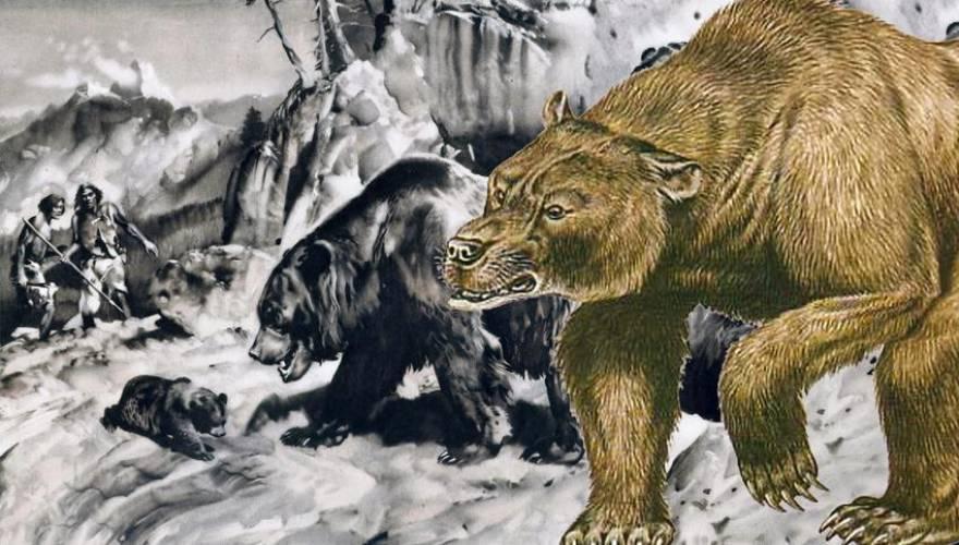 αρκουδα_9