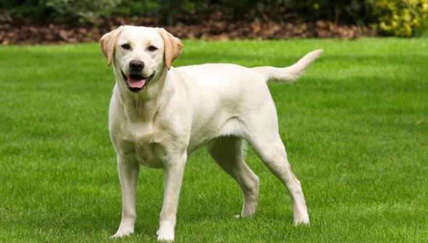 σκυλος_1