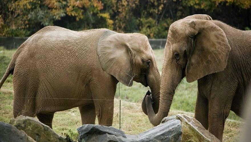 elephant_5