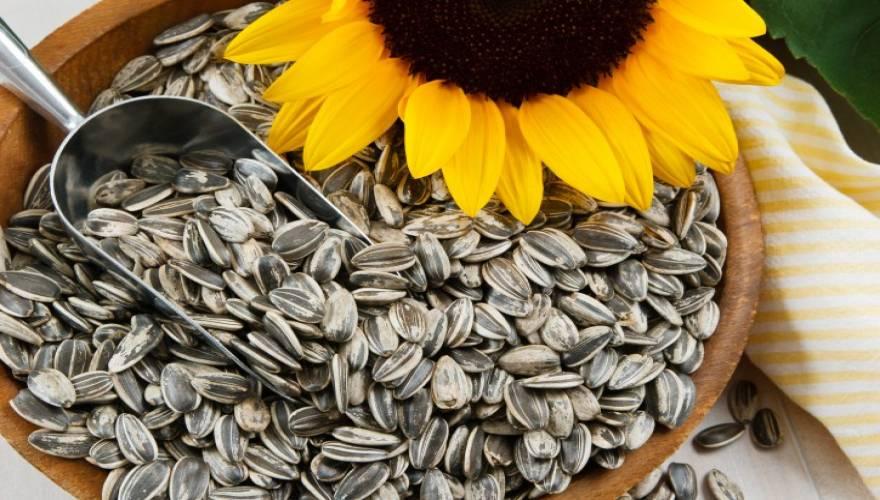 sunflower-seeds_0