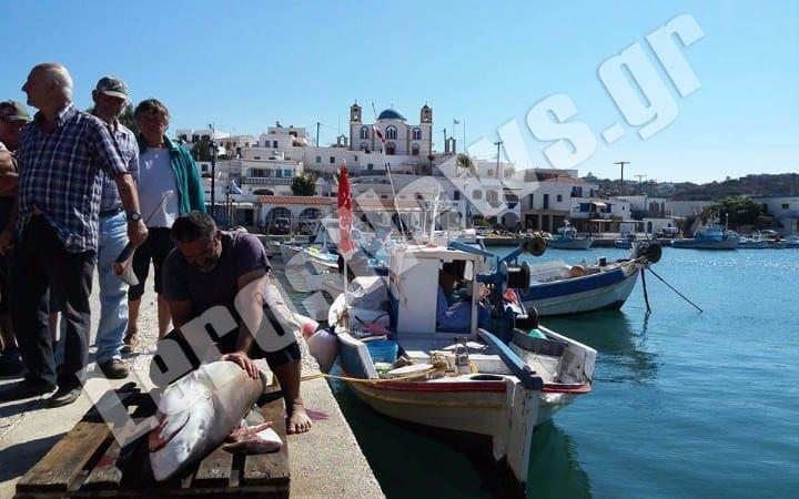 Λευκό καρχαρία έπιασαν ψαράδες με παραγάδι στα Δωδεκάνησα