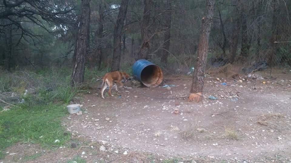 Βοσκός βασάνιζε επί χρόνια σκυλάκια στις Επτά Πηγές – Εισαγγελική παρέμβαση μετά απο ενέργειες της φιλοζωικής