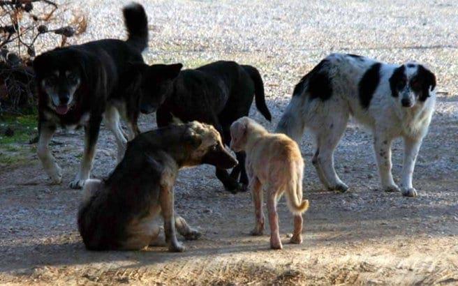 Πρόστιμο 30.000 ευρώ σε 75χρονο που κακοποίησε σκύλο