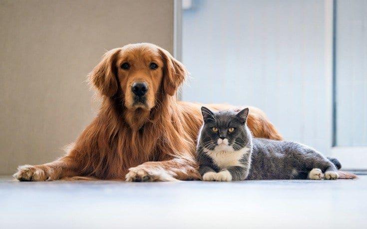 Ανατροπή στο νομοσχέδιο για τα κατοικίδια και τα αδέσποτα ζώα – Αποσύρεται για να επανεξεταστεί