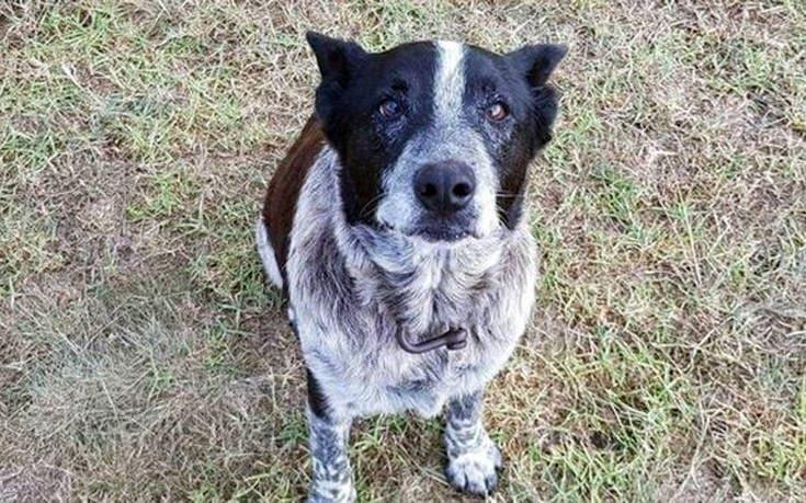 Ηλικιωμένος σκύλος έμεινε επί 15 ώρες δίπλα σε 3χρονη που χάθηκε στο βουνό
