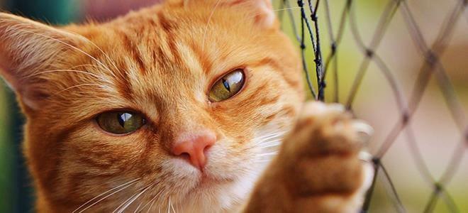 Με παράσιτο στο πεπτικό οι μισές γάτες στην Ελλάδα