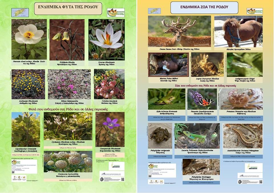 """""""Ενδημικά φυτά και ζώα της Ρόδου"""" διαδραστικές αφίσες"""