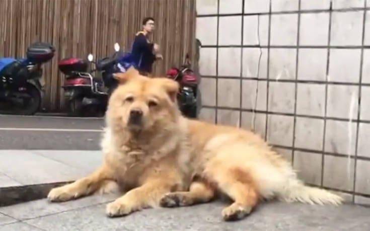 Το πιστό σκυλί που περιμένει καθημερινά το αφεντικό του στον σταθμό του τρένου