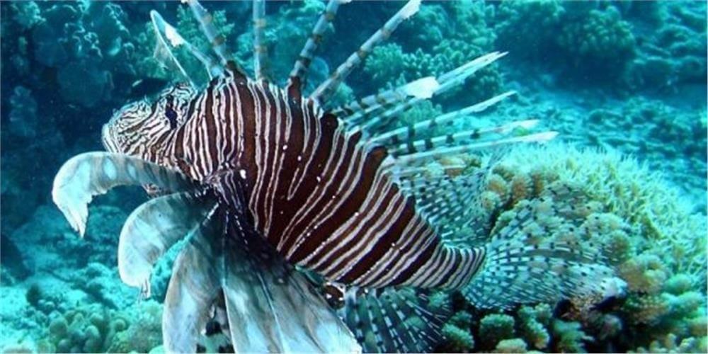Ίδρυμα Σταματίου : Έρευνα της στη σύσταση της ιχθυοπανίδας, αυτόχθονης και ξενικής, που εμφανίζεται στις αλιευτικές δραστηριότητες στις ακτές της Ρόδου