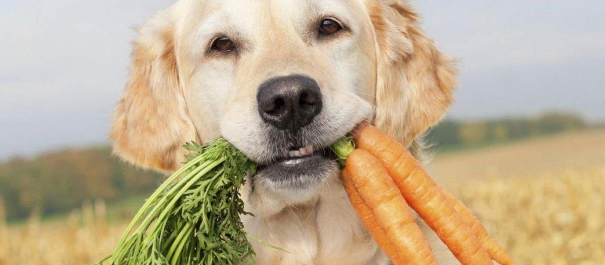 Ποιες είναι οι θανατηφόρες τροφές για τους σκύλους